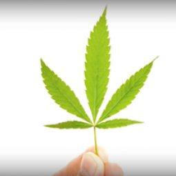 BREAKING NEWS: Oklahoma has legalized medical marijuana