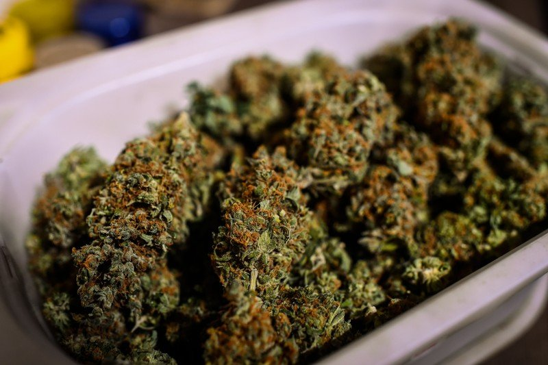 Georgia man admits growing marijuana in home, jury sends him home