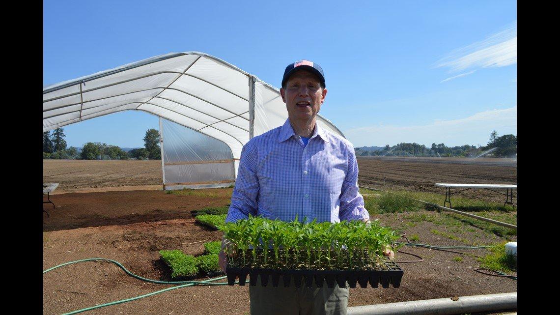 Hemp, close cousin of pot, could soon be legal across U.S. under latest farm bill