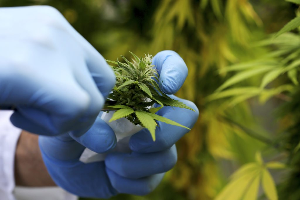 Italy's only medical marijuana producer can't keep up with demand