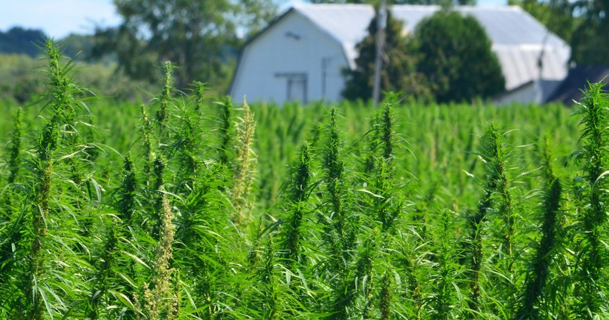 'It's not the boogeyman': Advocates push to legalize hemp farming in Texas | Business