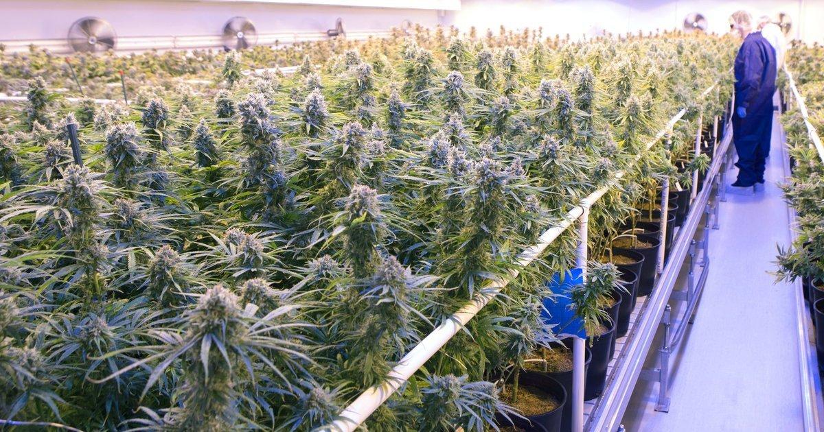 Marijuana company Tilray completes IPO above expected price