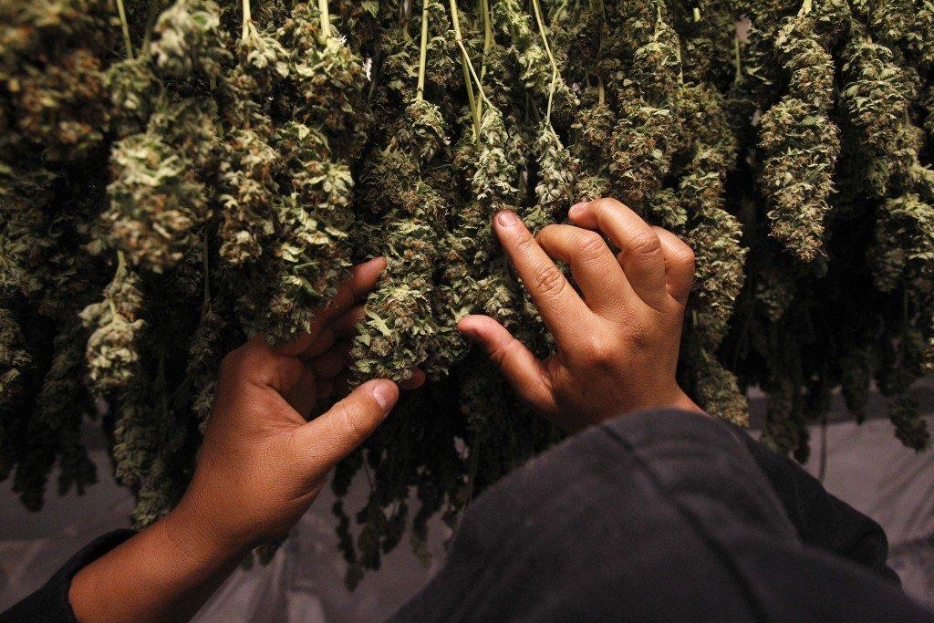 Oklahoma conservatives' views on medical marijuana evolving