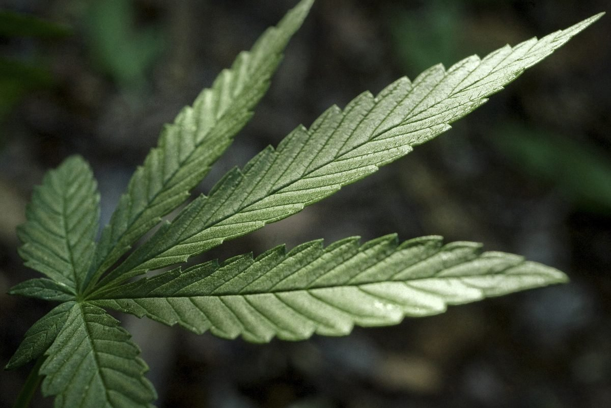 Pa. report: Legalizing marijuana could generate $580 million in state tax revenues