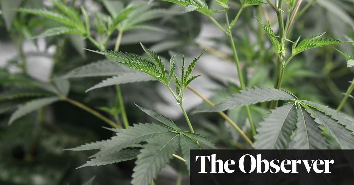 Police 'decriminalising cannabis' as prosecutions fall away [UK News]