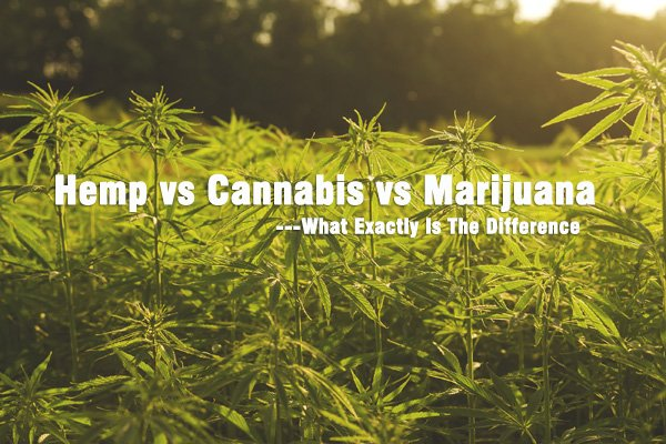 The Great Debate: Hemp vs Cannabis vs Marijuana - What Exactly Is The Difference