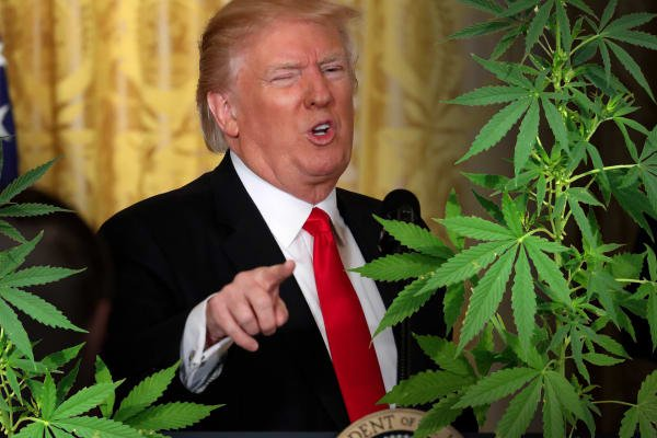 Trump's Surprising Support for Weed