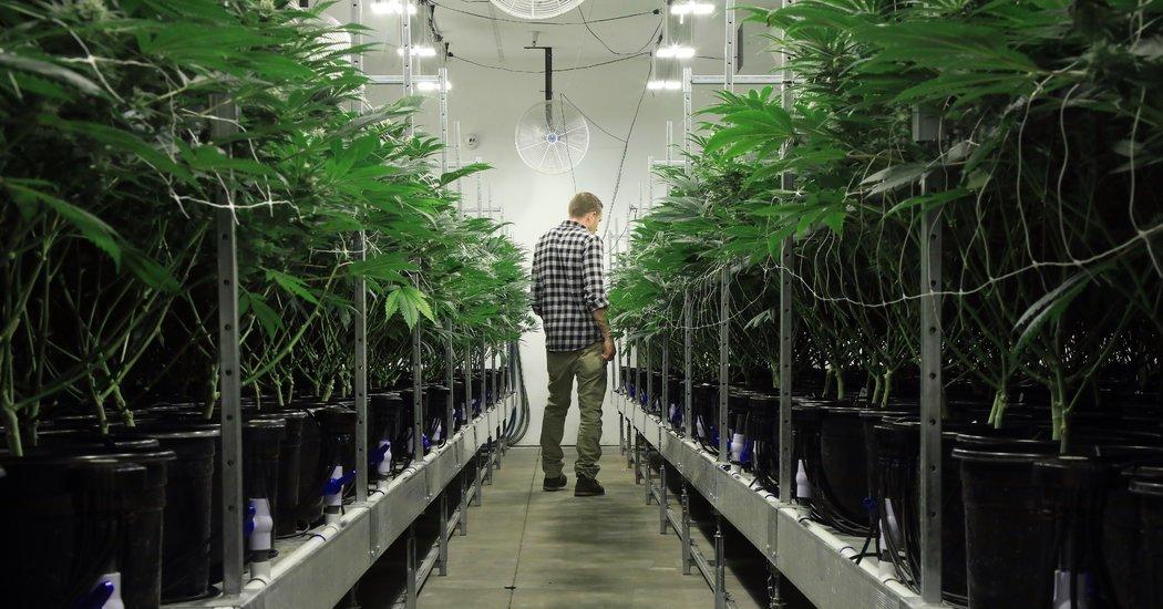 V.A. Shuns Medical Marijuana, Leaving Vets to Improvise
