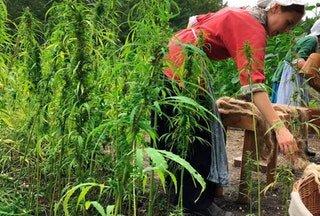 Gov. Bruce Rauner signs bill legalizing industrial hemp?