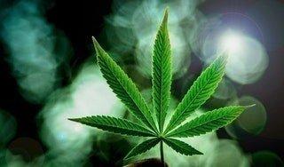 Learn How to grow Cannabis Yourself • r/Cannabis_Culture • r/Marijuana • r/weed • r/Cannabis_Culture