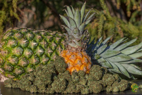 My experience with Pineapple Express for anxiety, depression, and a need for creativity in my life