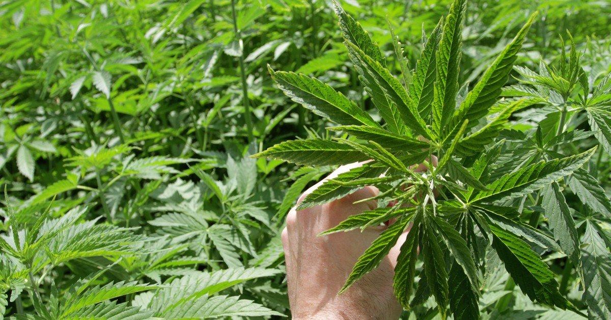 No Joke: Canadian Marijuana Production Could Hit 3 Million Kilograms by 2020