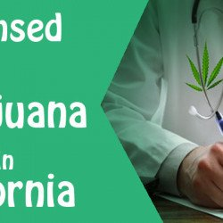 Online Medical Card Find the Licensed Medical Marijuana Doctors in California