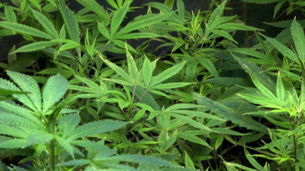 State: Ohio large-scale marijuana grow site can start planting