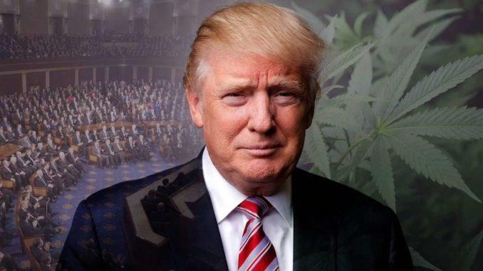 Trump Set To Legalize Medical Marijuana In All 50 States | urhealthinfo
