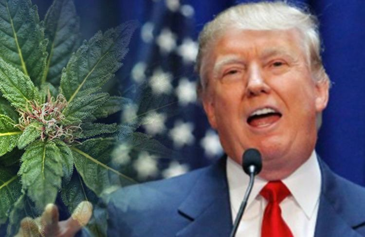 Trump says he is likely to support ending federal ban on marijuana | urhealthinfo