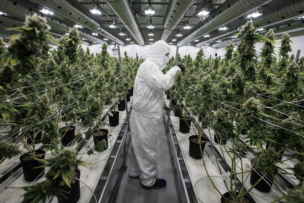 Weed legalization is on a roll— Will Canada, US, and Mexico launch a legal marijuana market?