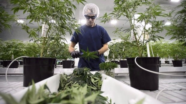 What you need to know about Ontario's cannabis plans | CBC News