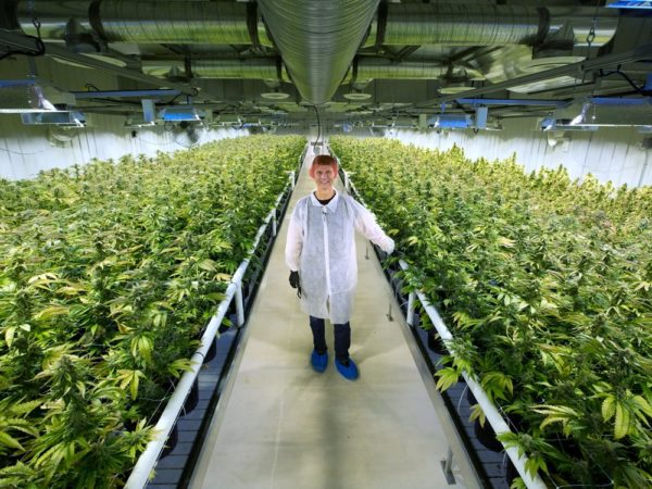 Aurora Cannabis 'more than ready' with pot supply for legalization