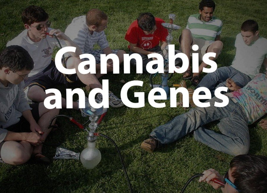 Cannabis and Genes (CSMD1 Gene) - Videos - Puff Puff Post