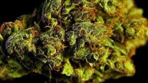 How to Check Top Quality Marijuana