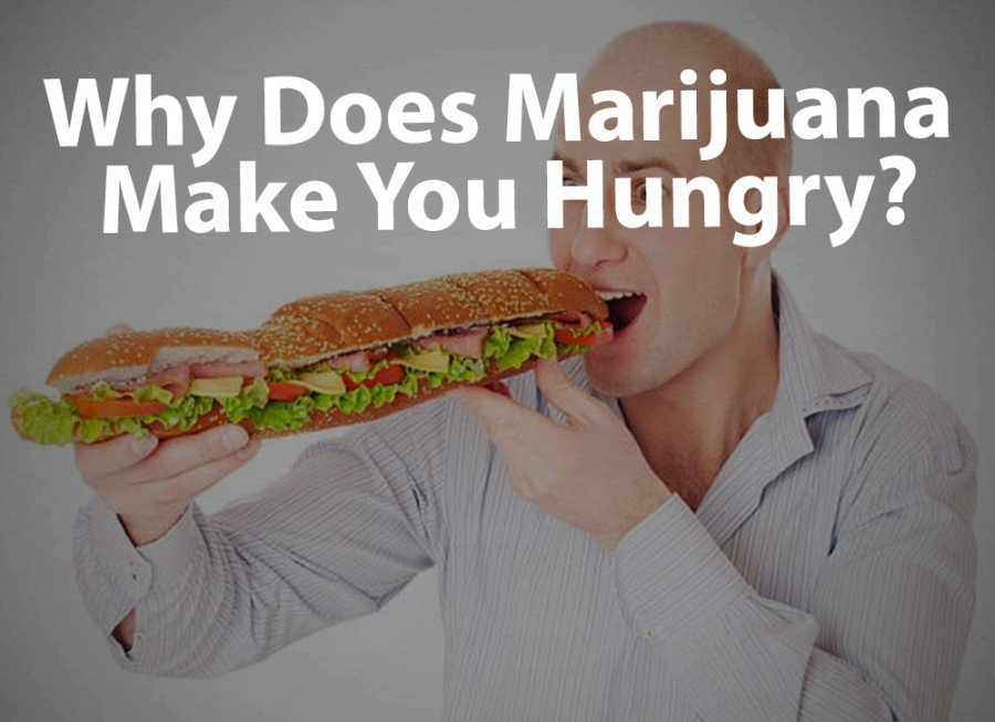Munchies: Why Does Marijuana Make You Hungry? - Puff Puff Post
