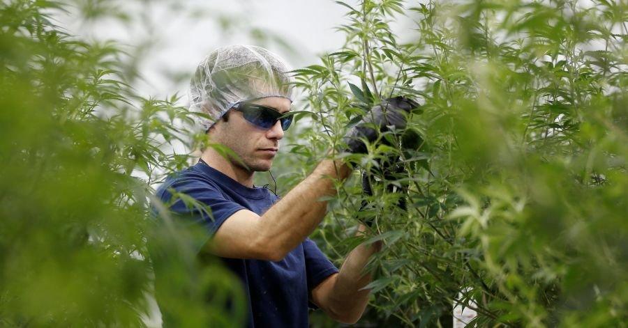 Wall Street's Marijuana Madness: 'It's Like the Internet in 1997'