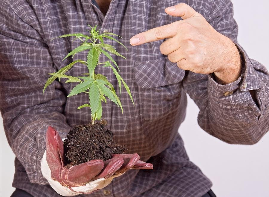 9 Reasons Why It is Time to Grow Your Own Cannabis | Medical & Recreational Marijuana News & Articles