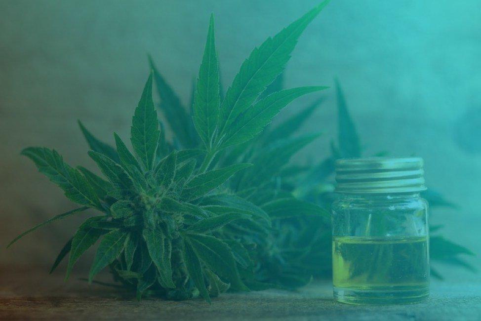 CBD Oil—A Substitute for Medical Marijuana?