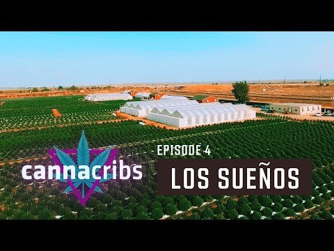 How do you guys feel about Commercial Grow ops like this ? Largest Outdoor Cannabis Farm in World