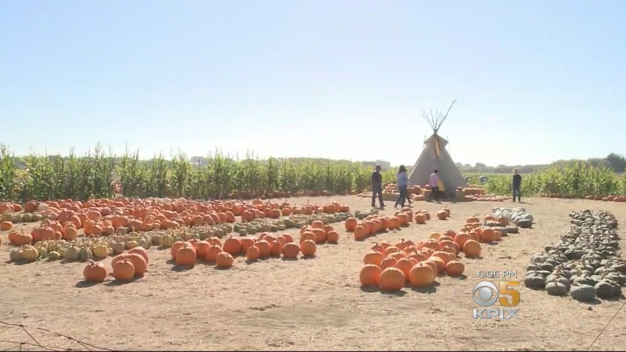 Marijuana Measures May Save Half Moon Bay Pumpkin Farmers
