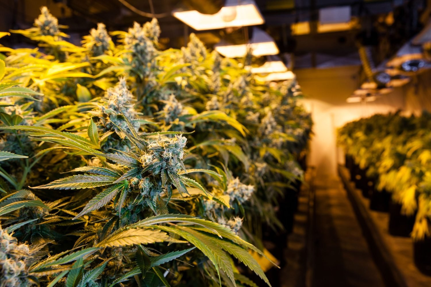 Ontario to allow cannabis sales at production centers