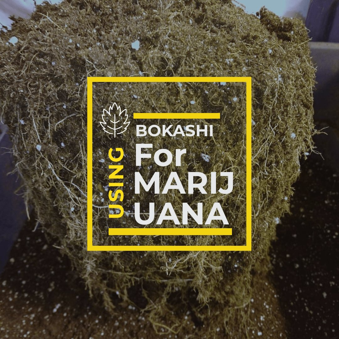 Using Bokashi to Make Your Marijuana Plants Thrive