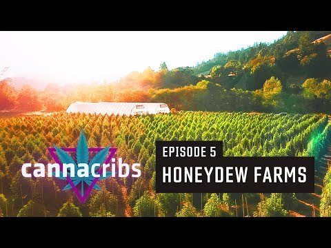 1st California Recreational Cannabis Farm (S1E5: Honeydew Farms, Humboldt)
