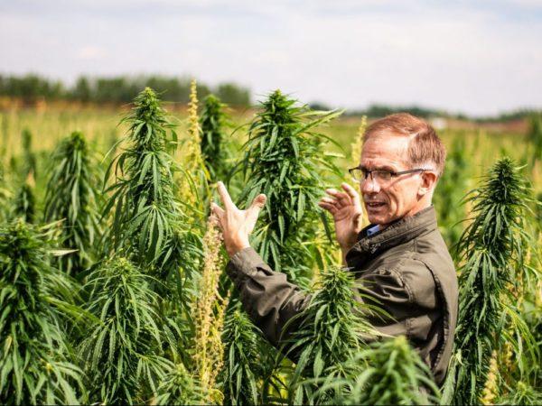 Alberta hemp farmers see bright future in wake of Cannabis Act