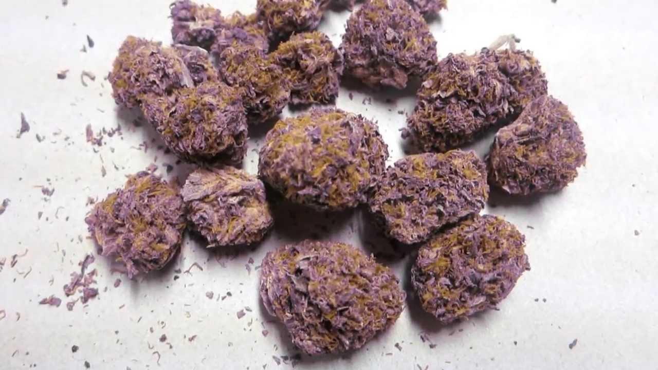 Buy Purple Urkle kush online
