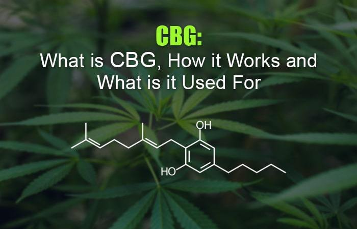 CBG: What is CBG, How Does it Work and What is it Used for?