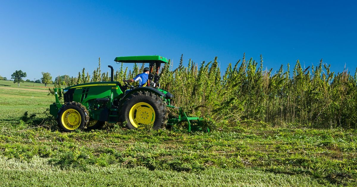 Growing hemp is about to be legal for the first time in nearly a century