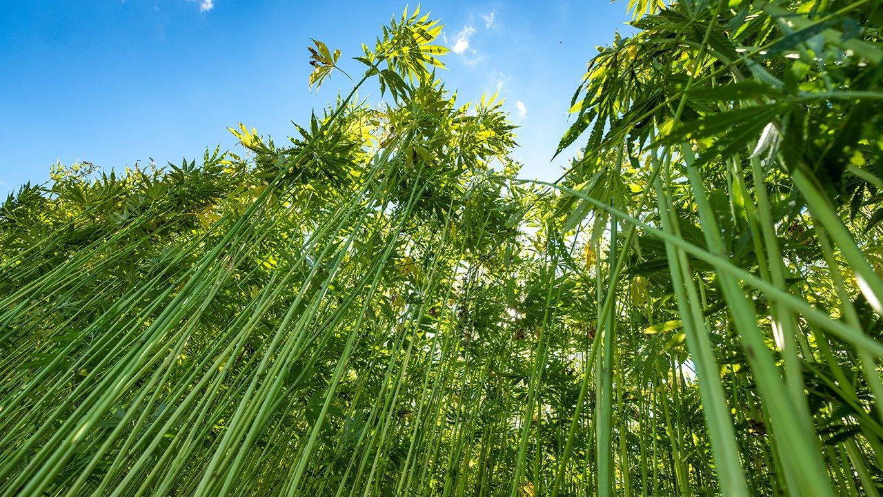 Hemp: A Little Plant; Powerful Enough to Spark Big Change