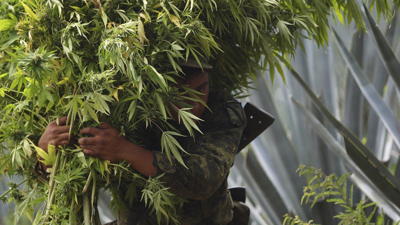 Mexico Looks To Be Next To Legalize Marijuana
