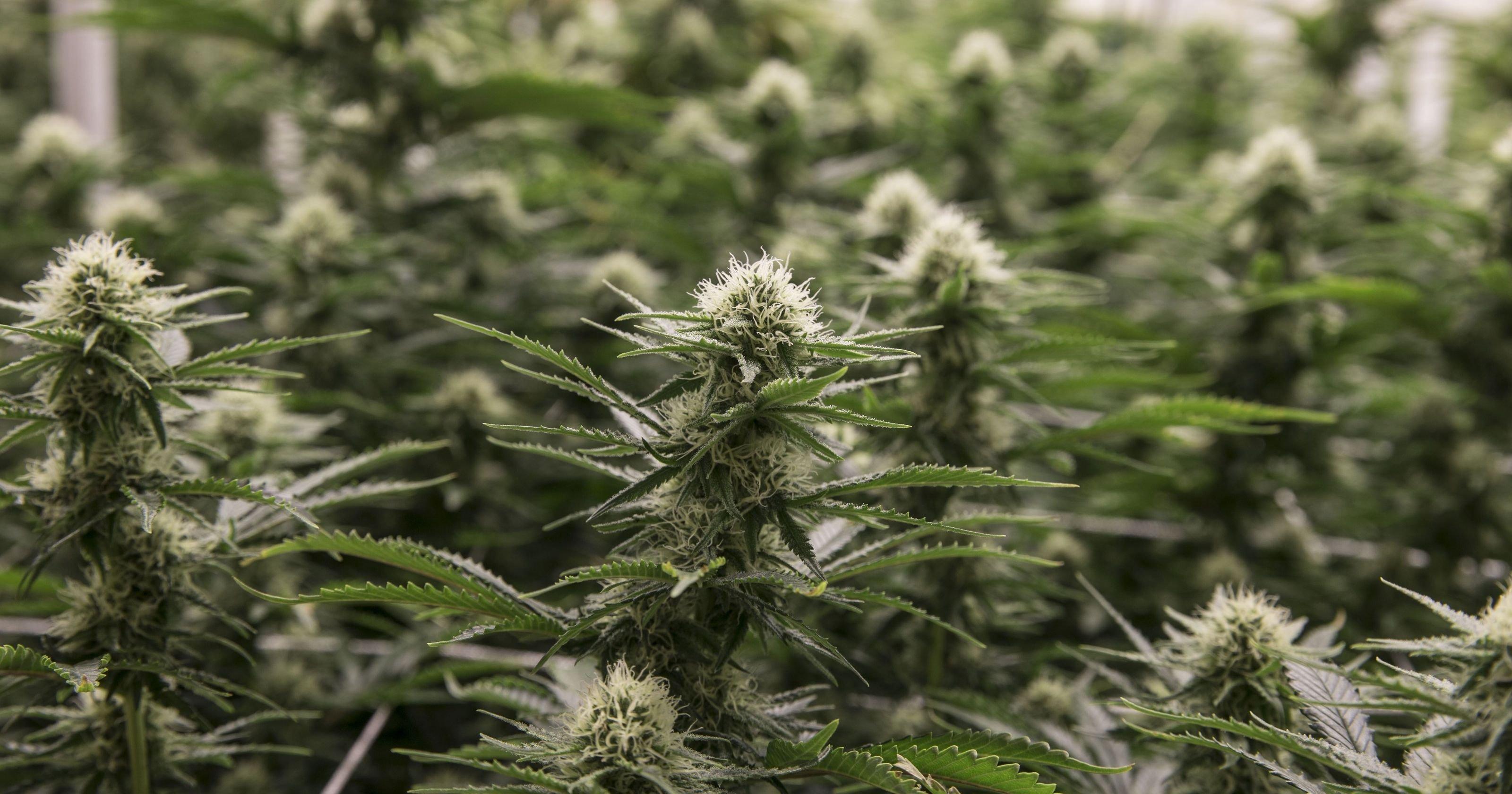 NJ legal weed: Possible NJ marijuana vote next week in committee