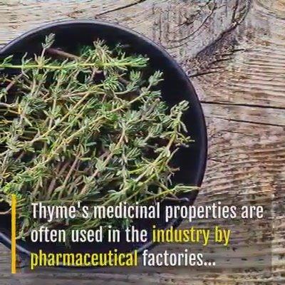 Thyme's medicinal roperties....