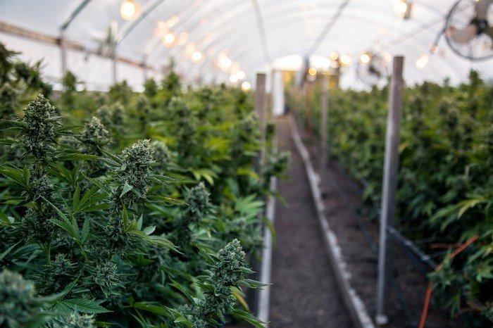 Cannabis Shorts Gain $157M | Former President of Mexico Says Cannabis Isn't Gold Rush | US Cannabis Tax Bonanza