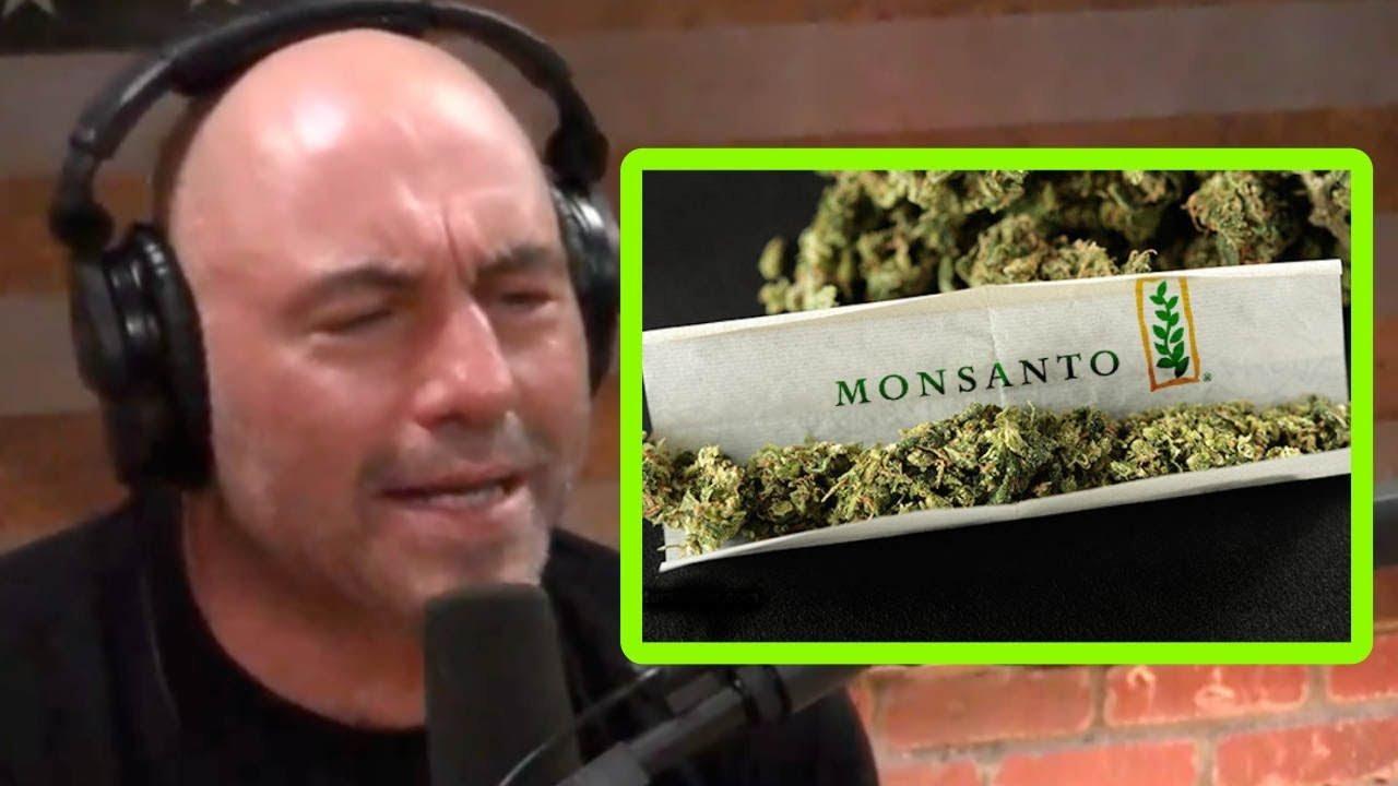 Joe Rogan SLAMS Corporate Weed Monopolies
