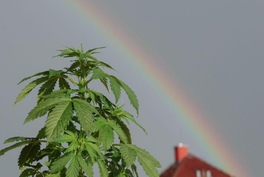 The U.S. Stance on Marijuana Is Contradictory