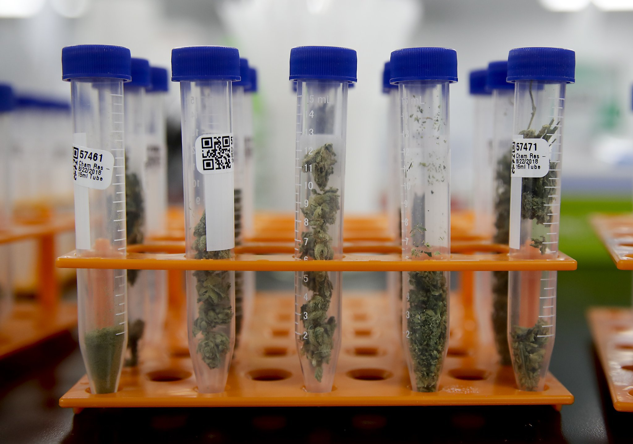 The recall of tens of thousands of pounds of marijuana and other products after a Sacramento laboratory was caught faking pesticide test results has jolted a cannabis industry that has struggled for legitimacy in its first year facing a full-slate of state regulations.
