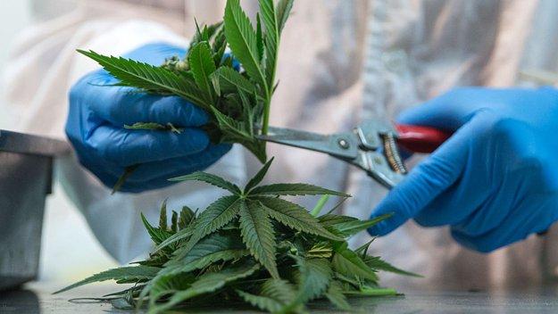 Florida Gov. Ron DeSantis on Medical Marijuana: #NoSmokeIsAJoke
