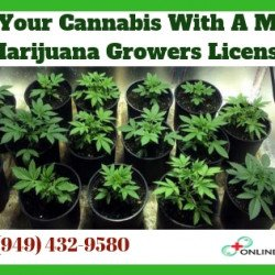Grow Your Cannabis Medicine with a Medical Marijuana Growers License