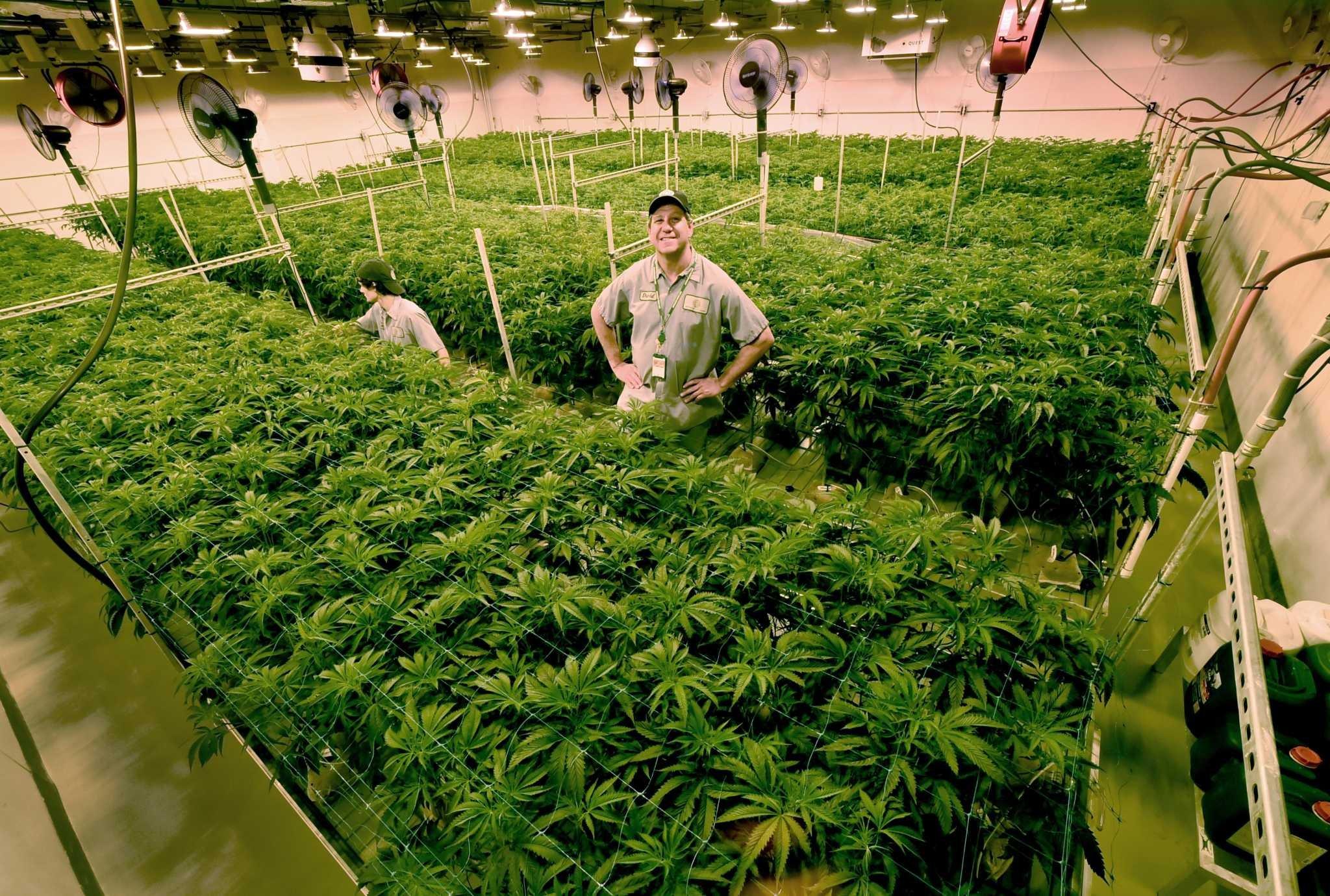 Legalizing recreational marijuana debate grows in CT