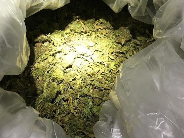 Oregon man busted with 6,701 pounds of what Idaho police suspect is cannabis, not hemp